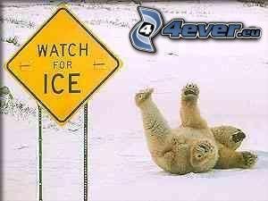 orso, ghiaccio