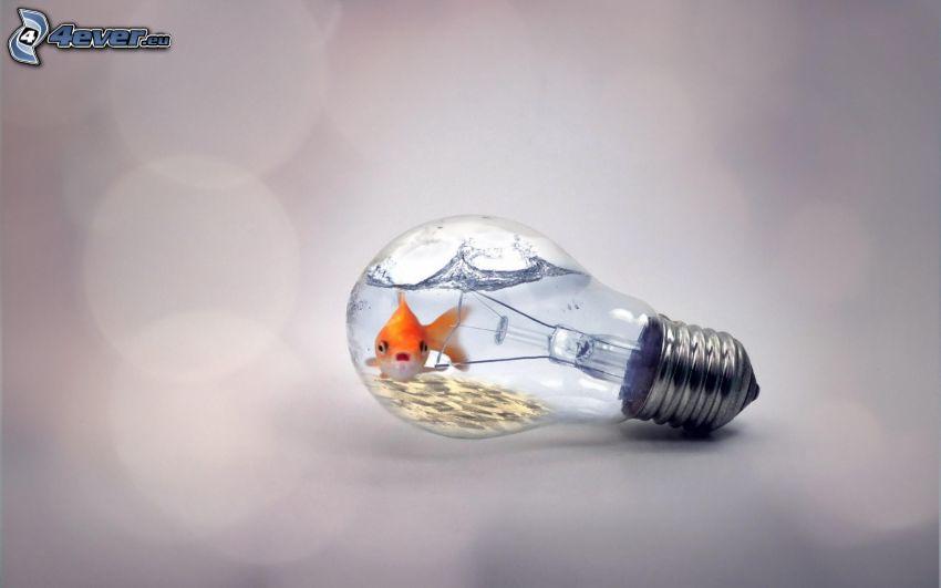 pesce d'oro, lampadina, acqua