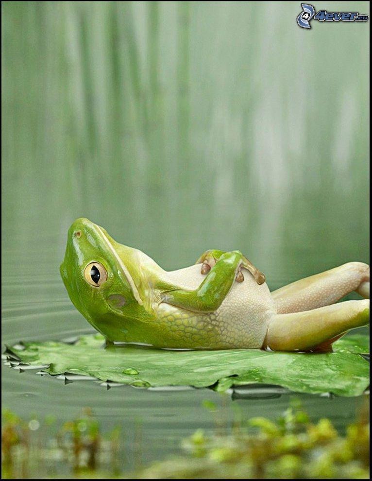 rana rilassante, riposo, rana