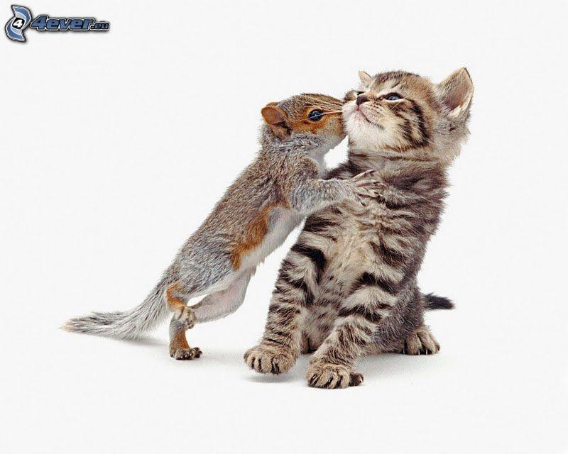 scoiattolo, gattino