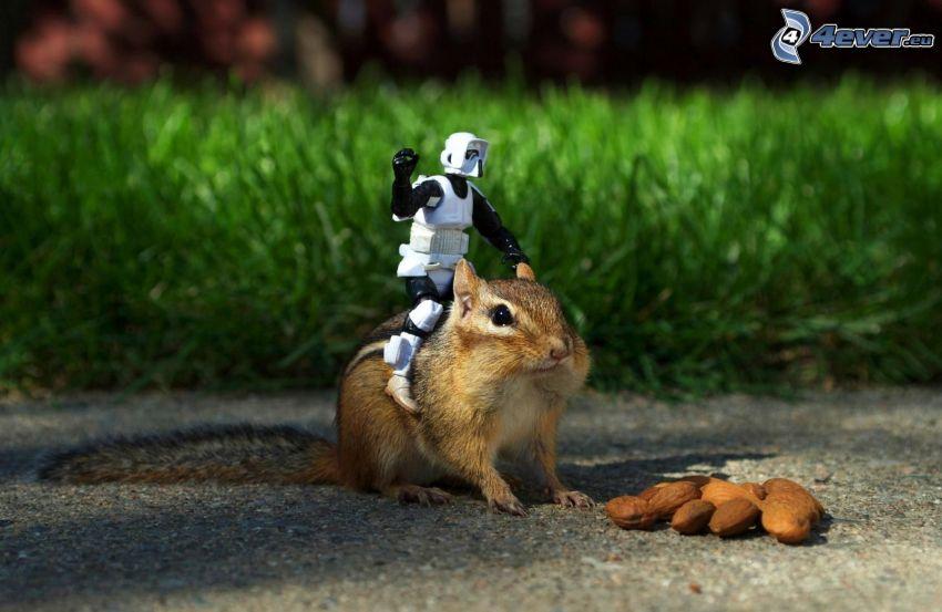 scoiattolo, pupazzo, mandorle
