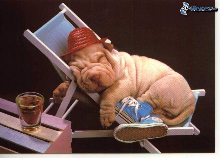 Shar Pei cucciolo, cane vestito, riposo, lettino