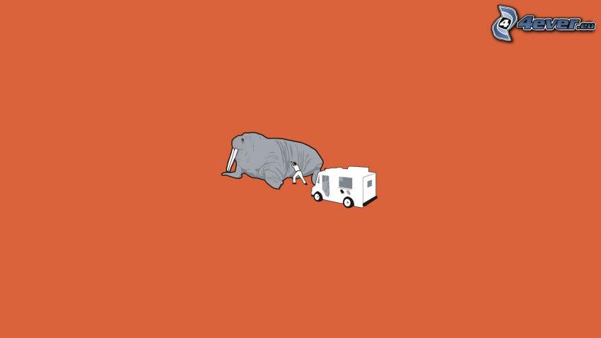 tricheco, caravan