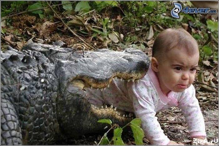 bambino, coccodrillo, fotomontaggio