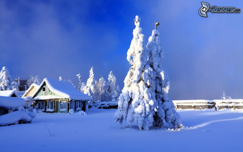 albero nevoso, casa nevosa