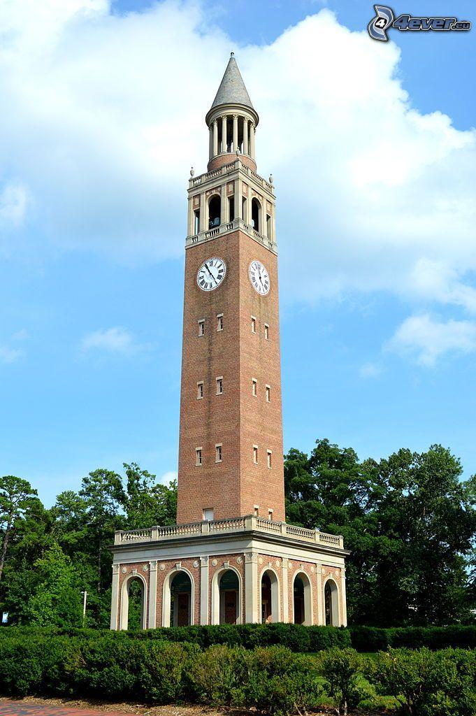 campanile, torre, orologio, alberi