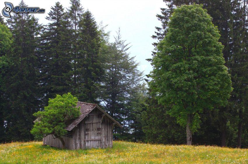 capanna, foresta, prato