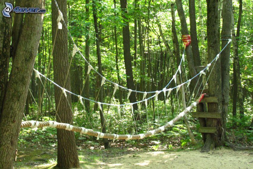 centro di arrampicata, foresta