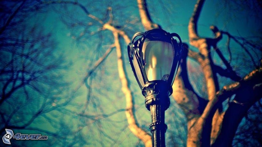 lampione, albero