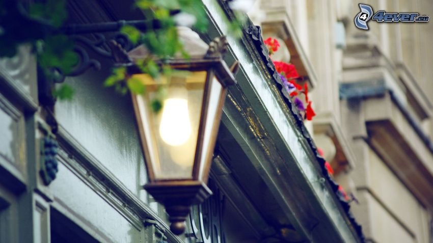 lampione, fiori