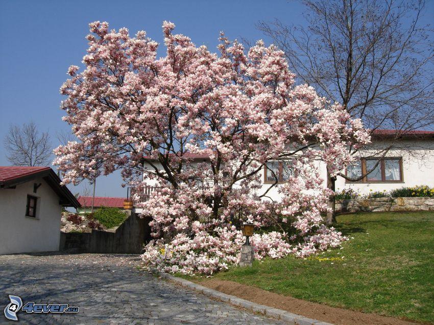 magnolia, case