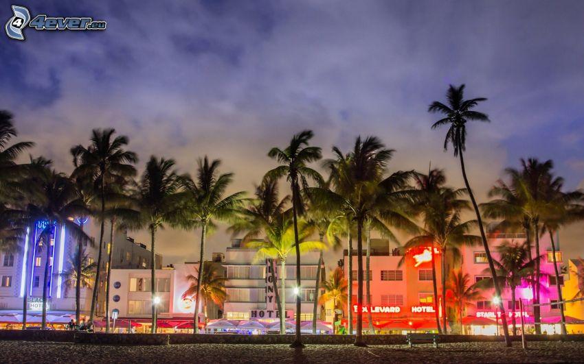 Miami, palme, case colorate