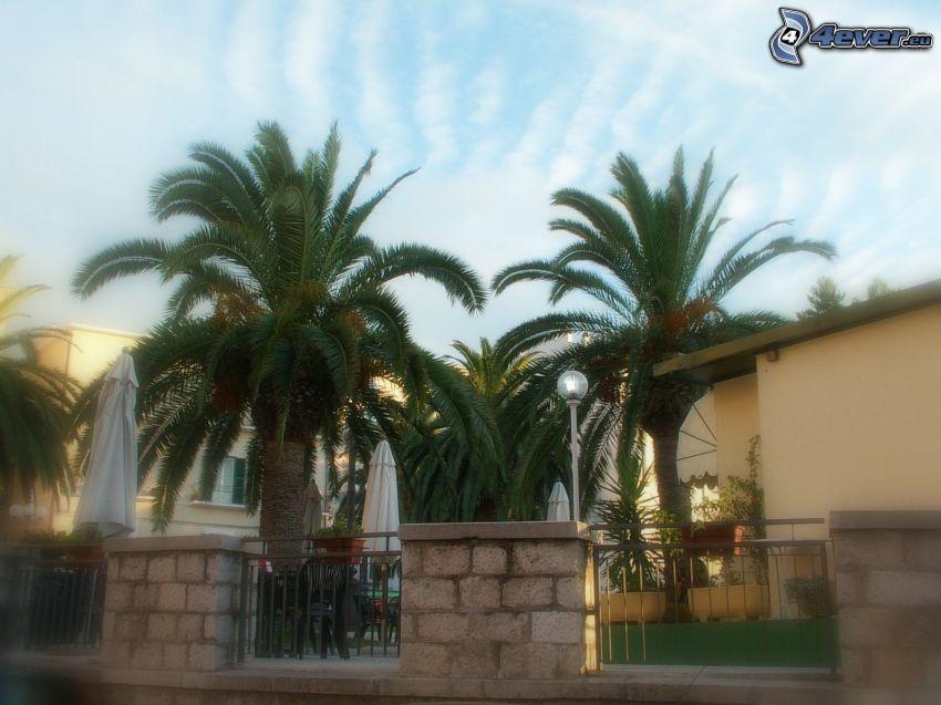 palme, recinzione, case