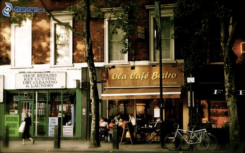 strada, caffè bar, alberi, Biciclette