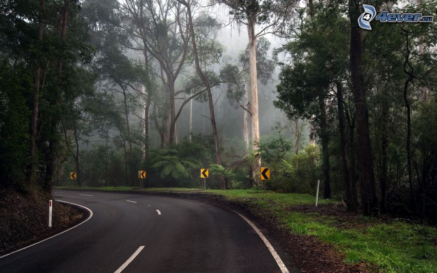 curva, strada, foresta, giungla