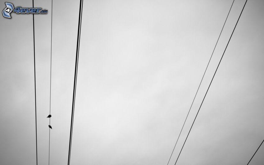 elettrodotto, uccelli