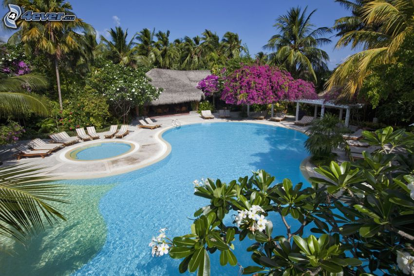 piscina, chalet, palme