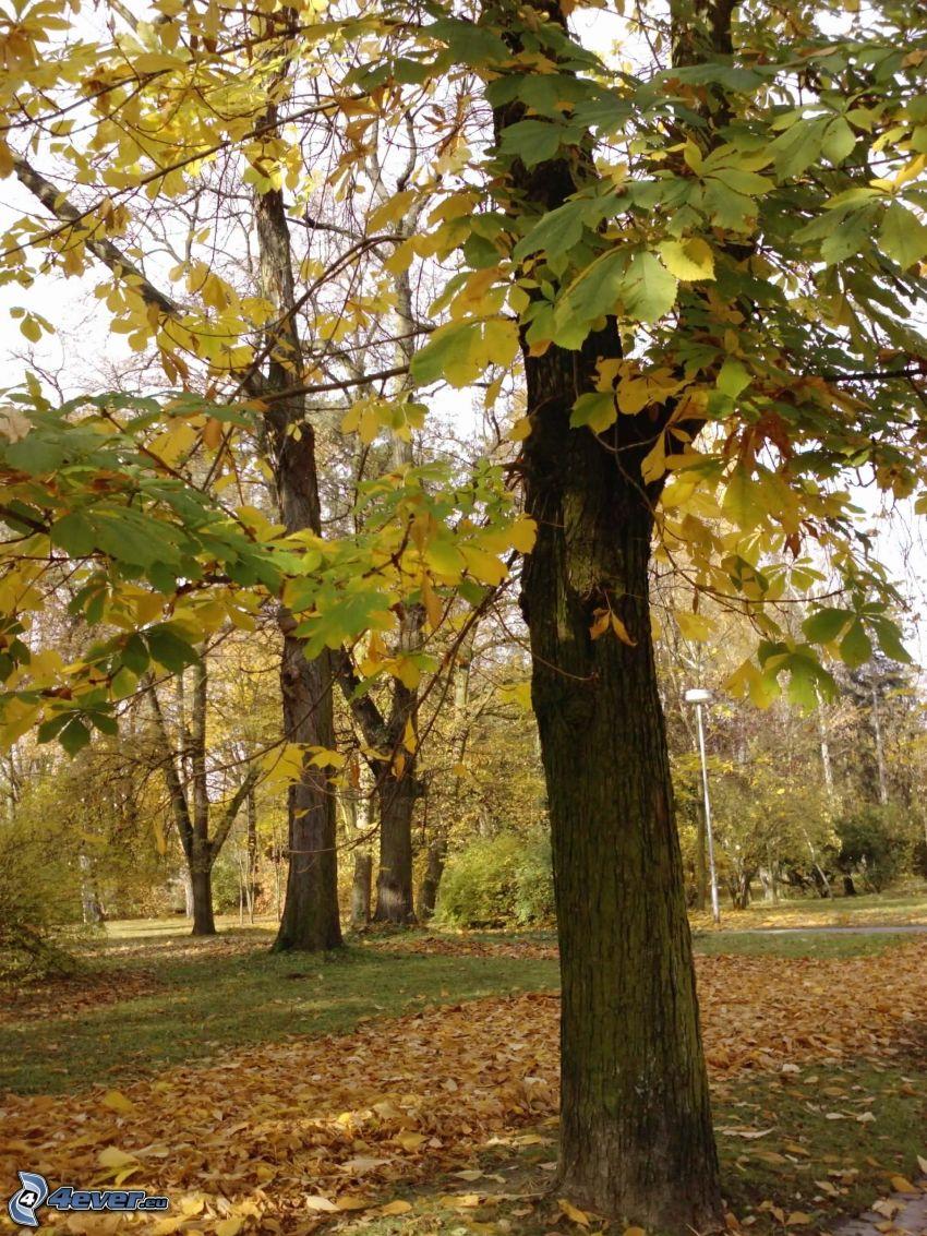 alberi frondiferi, foglie secche, parco