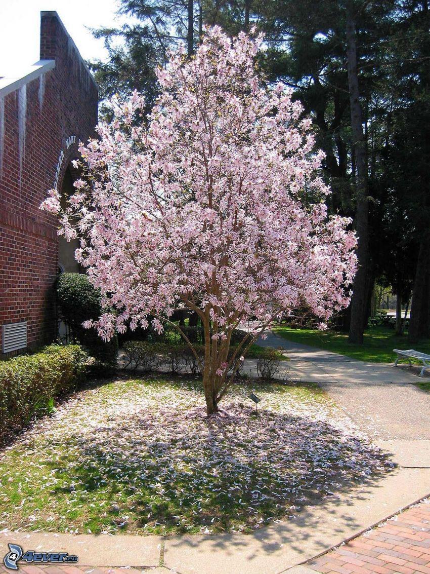 magnolia, muro di mattoni