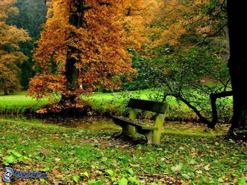 panchina nel parco, alberi
