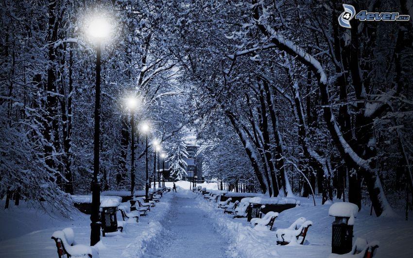 parco, alberi coperti di neve, strada, lampioni, panchine