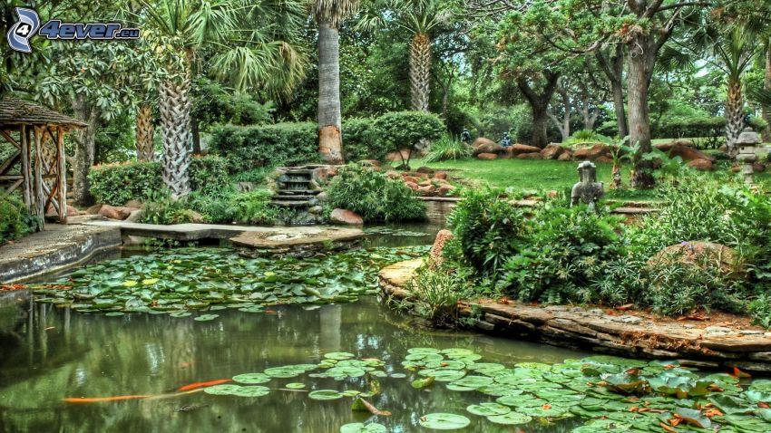 parco, laghetto, giardino, HDR