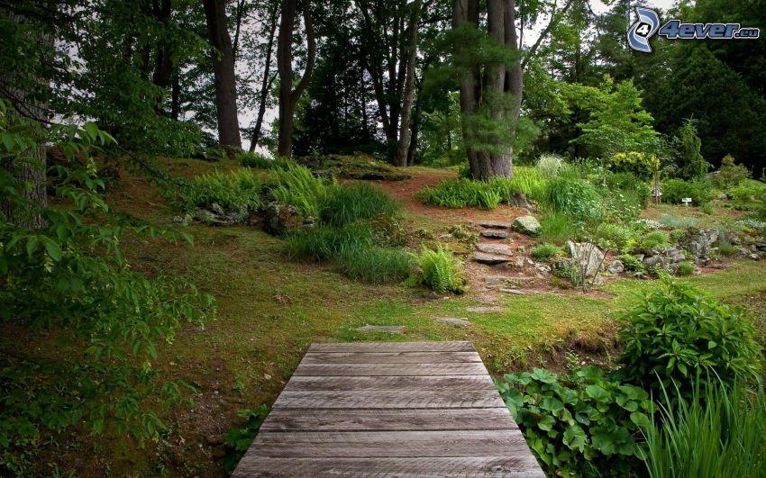 parco, molo di legno, verde
