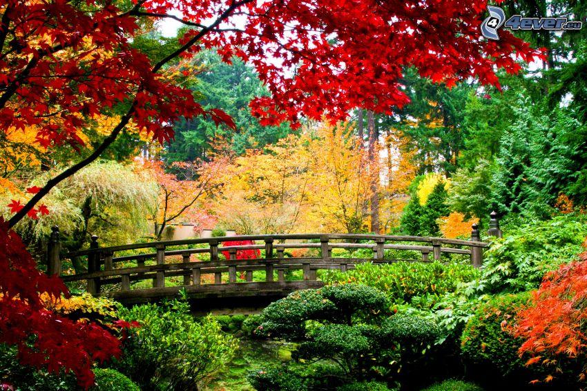 parco nell'autunno, alberi autunnali, ponte di legno