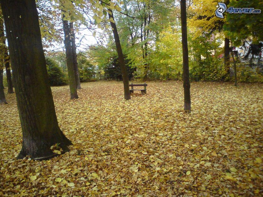 parco nell'autunno, foglie cadute, panchina sotto un albero