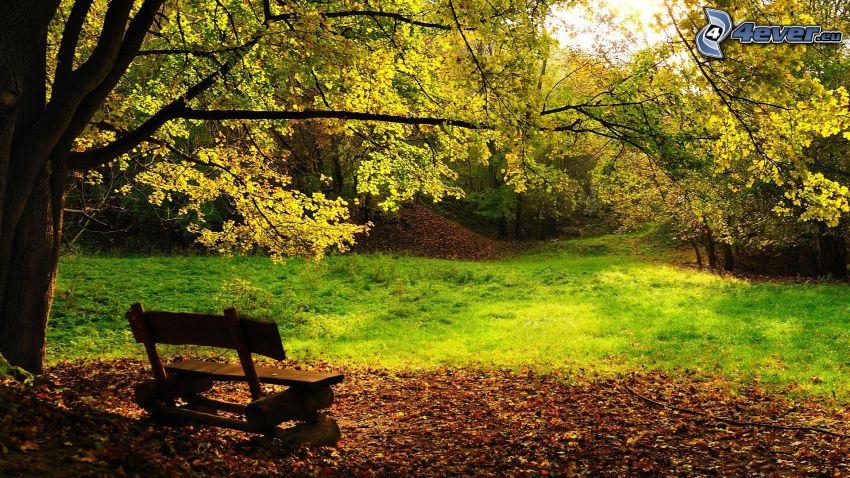 parco nell'autunno, panchina nel parco, alberi frondiferi, foglie secche