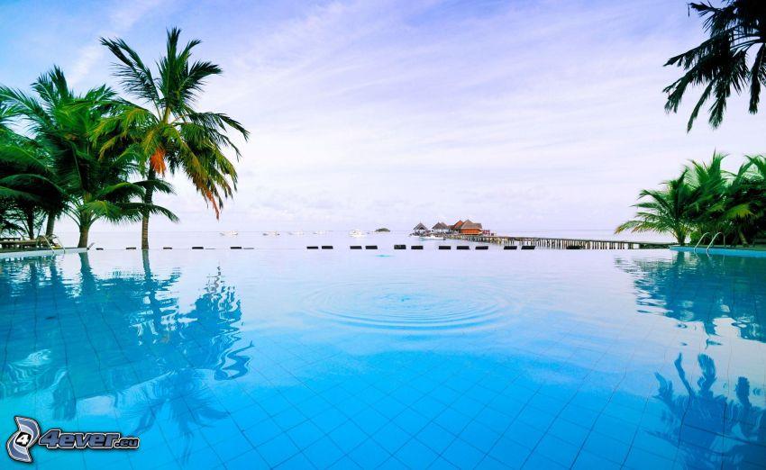 piscina, palme