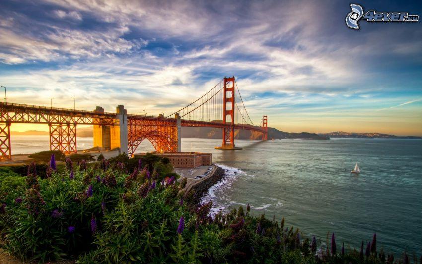Golden Gate, USA, oceano Pacifico, fiori, tramonto, HDR