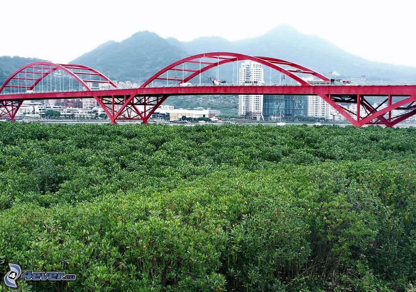 Guandu Bridge, foresta