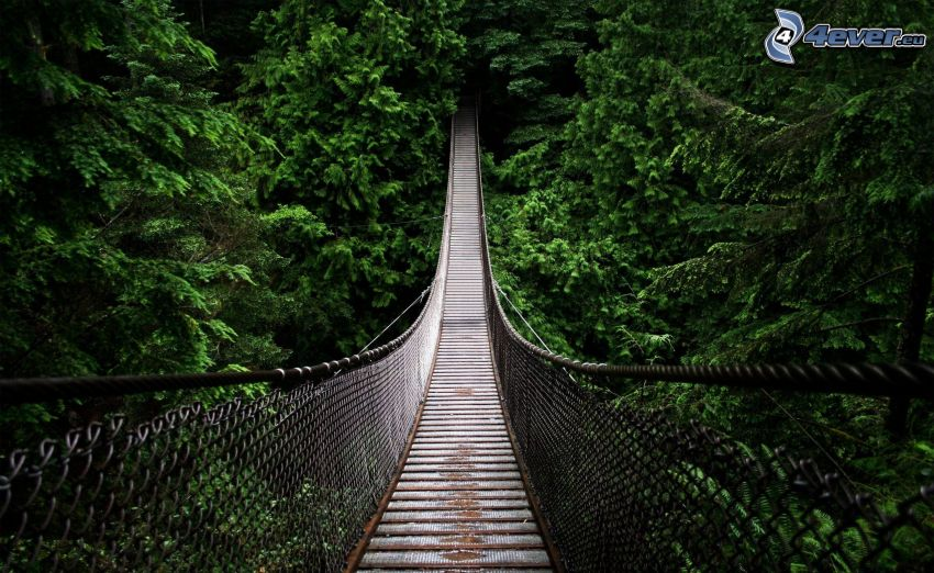 ponte pedonale, bosco di conifere, Canada