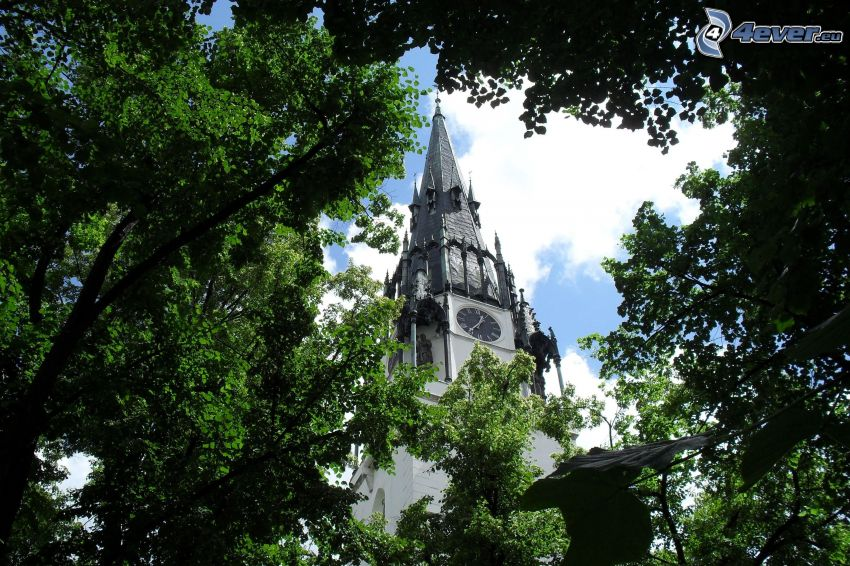 campanile, parco, alberi