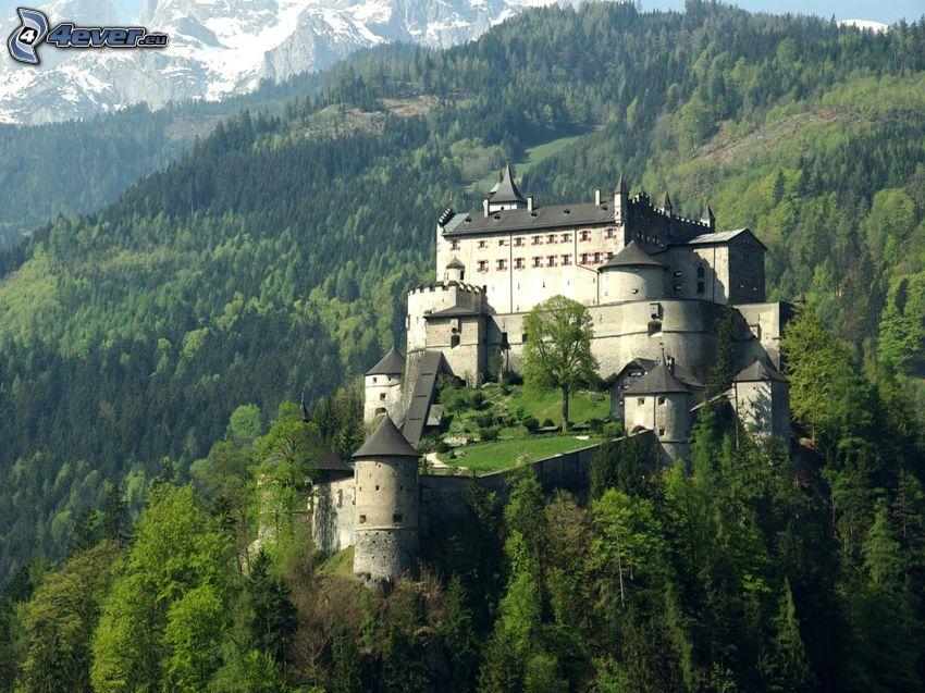 castello di Tarasp, bosco di conifere