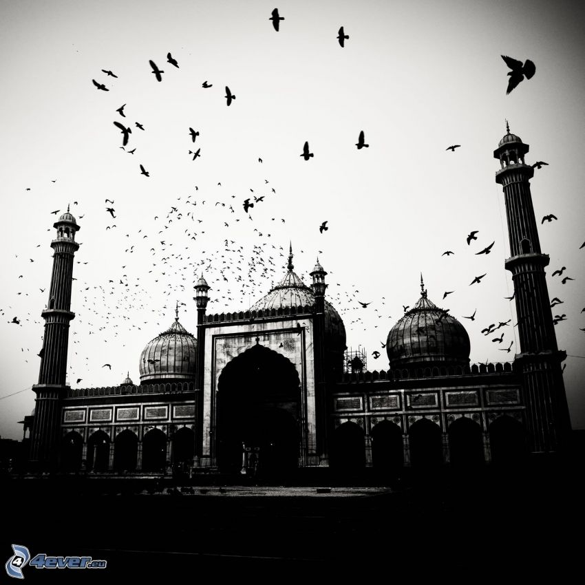 moschea, portone, stormo di corvi, foto in bianco e nero