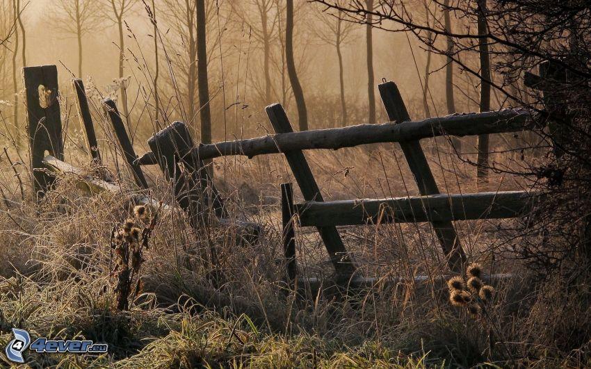 vecchio recinto di legno, alberi, piante