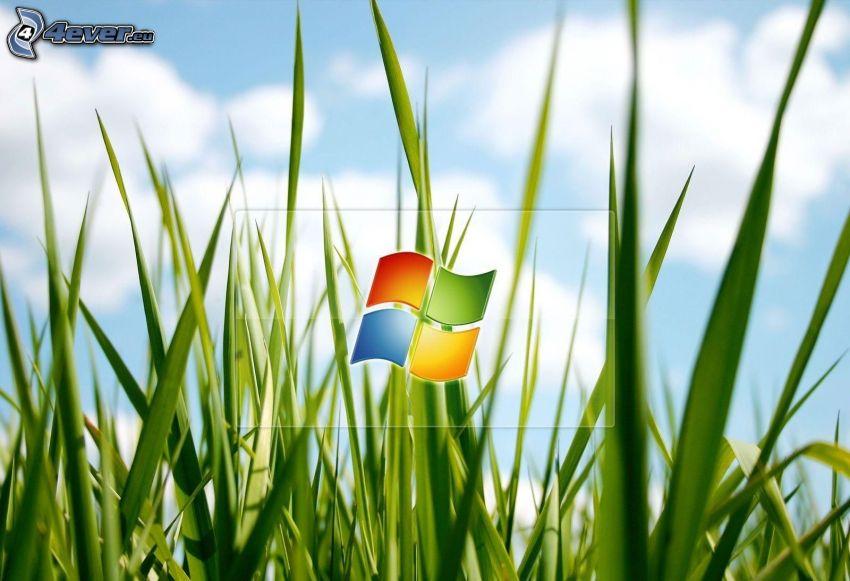 Windows, l'erba