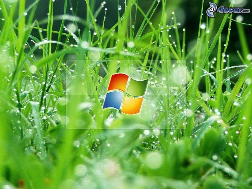Windows 7, fili d'erba, erba con rugiada