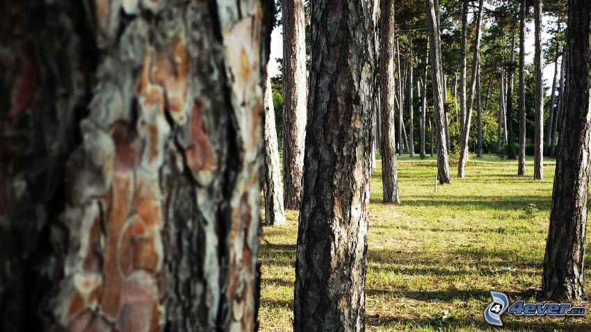 alberi, l'erba