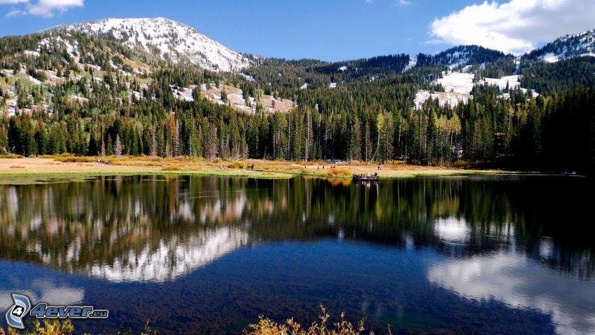 alberi, montagna, lago, riflessione