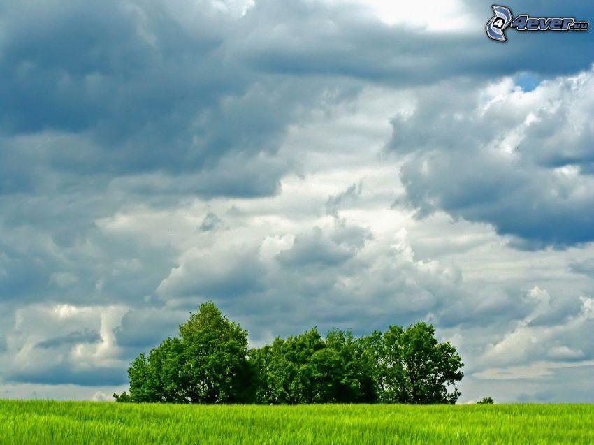 alberi, prato, nuvole