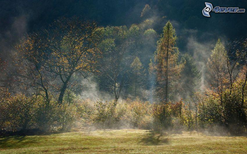 alberi autunnali, raggi del sole