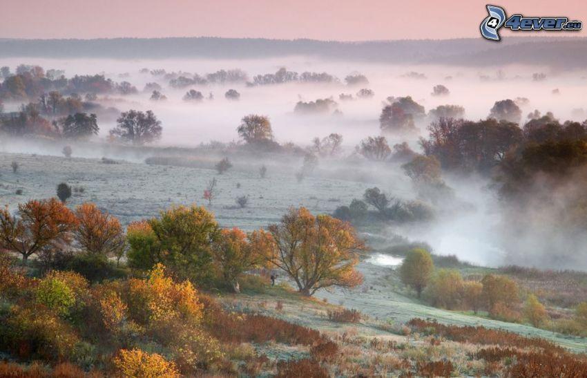 alberi colorati, nebbia a pochi centimetri dal terreno, brina