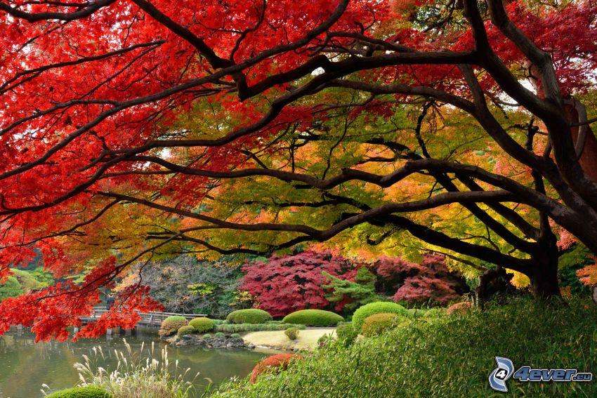 alberi colorati, parco