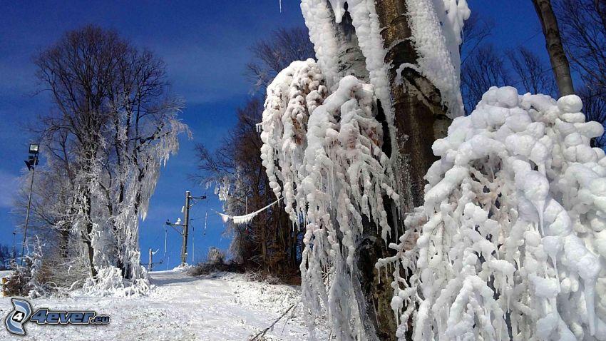 alberi congelati, strada innevata, gelo, inverno, natura