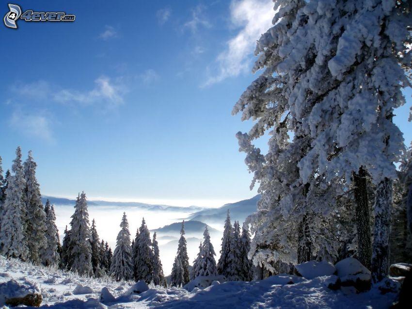 alberi coperti di neve, inversione termica