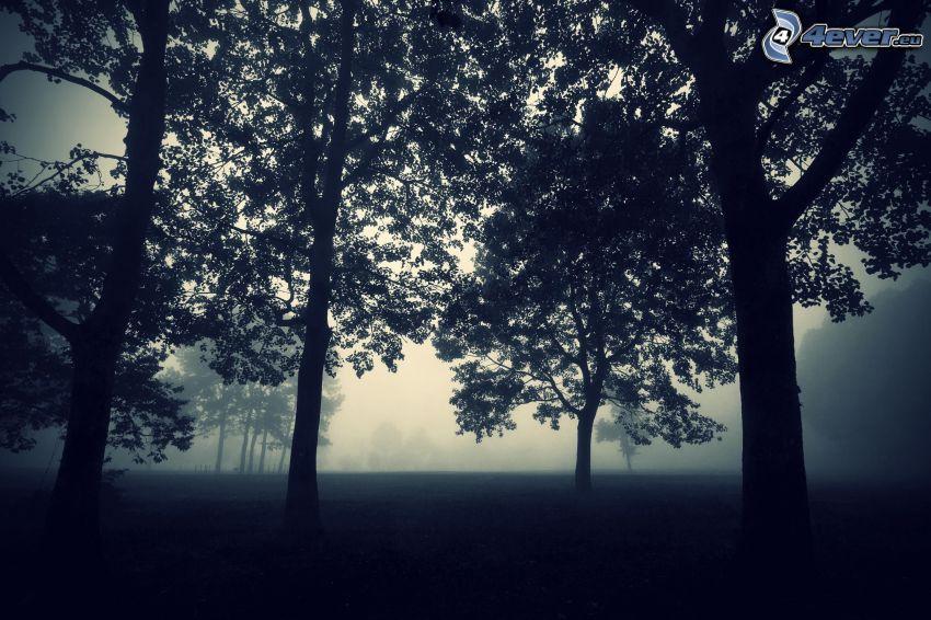alberi frondiferi, nebbia