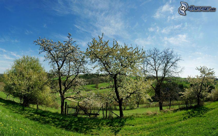 alberi in fiore, giardino, recinzione
